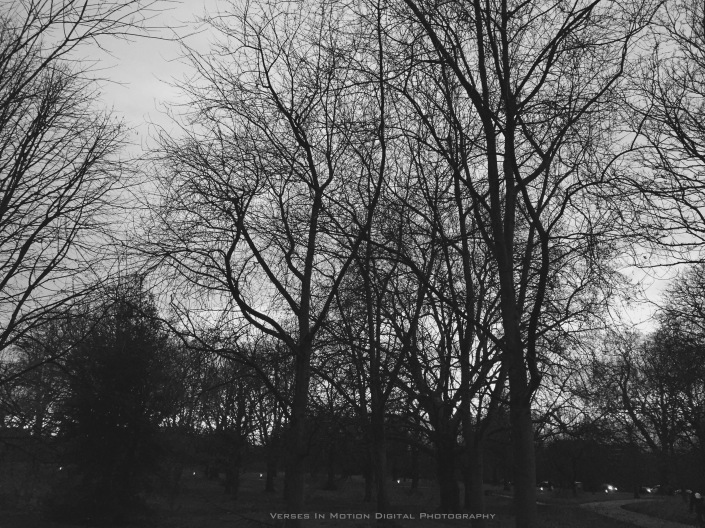 silent trees (1)